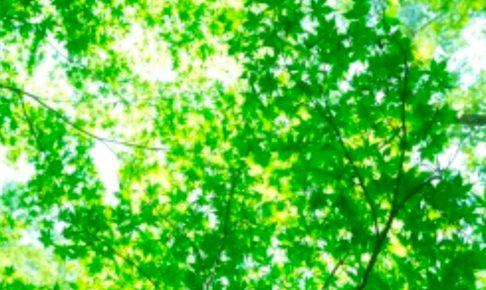 今日も一日HAPPYに★【気学】(2018年10月22日の運勢)希翔の毎日メッセージ