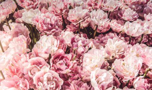 ピンクに隠された心理効果とは?女性がピンクを取り入れる効果