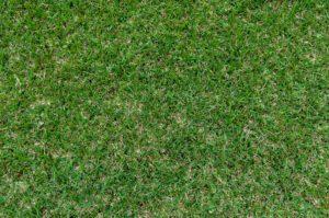 『隣の芝生は青い』行動パターン
