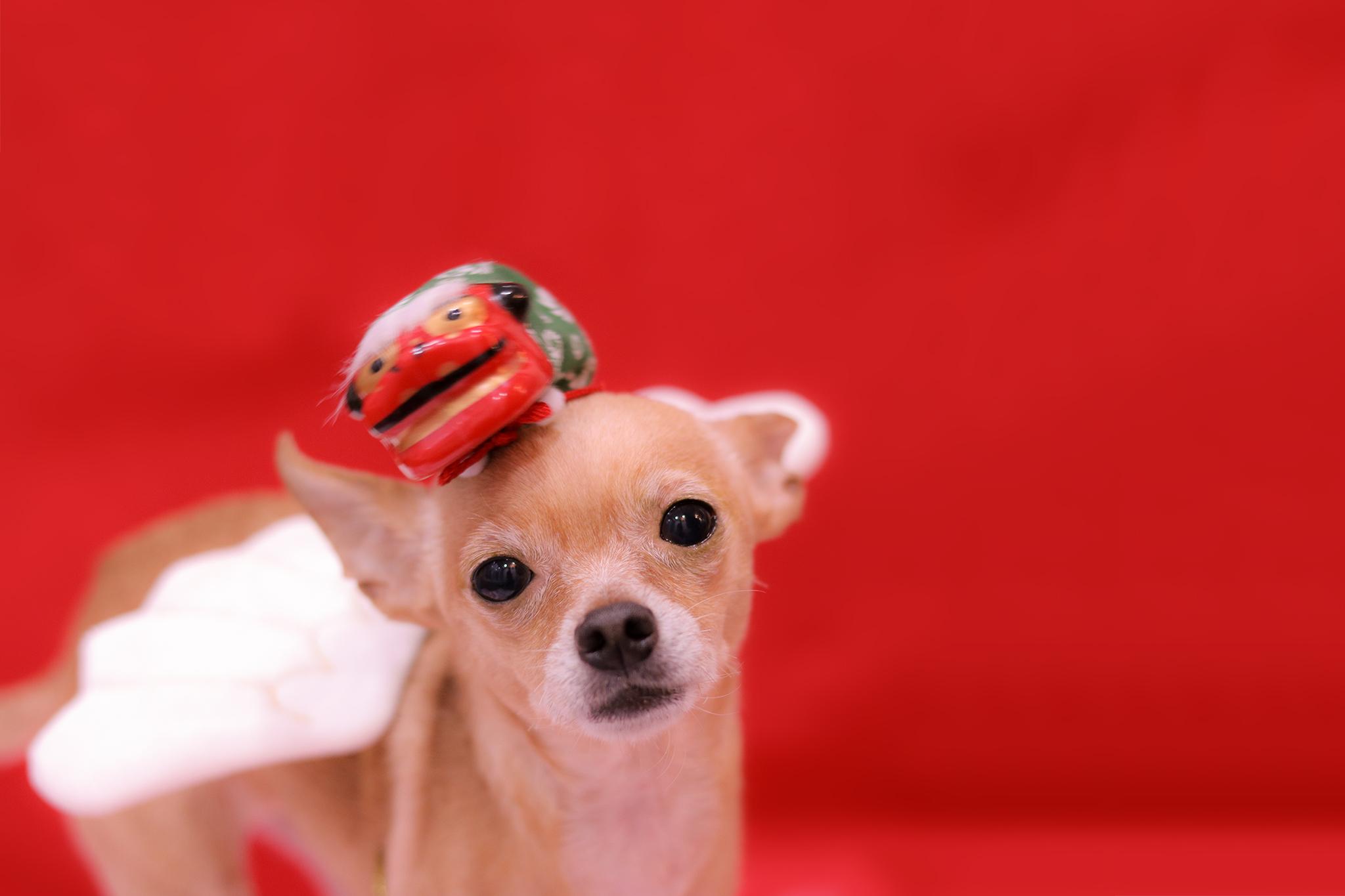 今年の干支は戌年。お教えします!犬の事、トリマーの事。