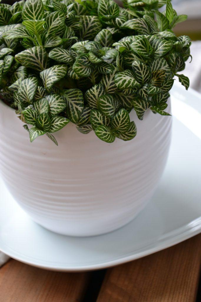 金運アップに効果のある玄関の風水②観葉植物を置く