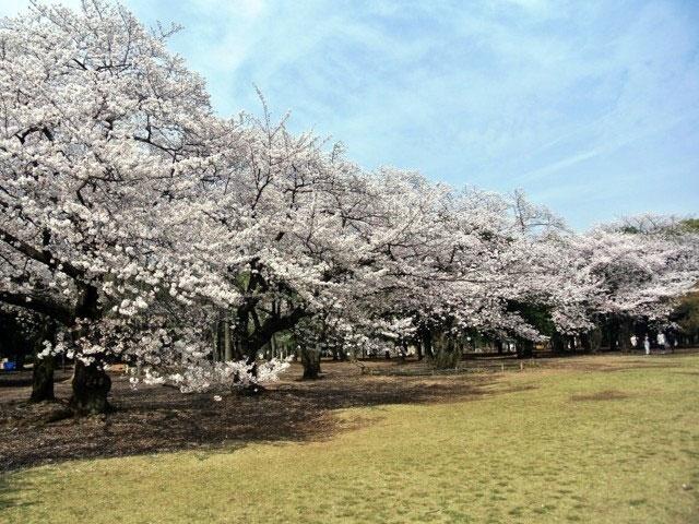 1.【渋谷】都立代々木公園