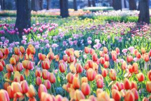 ①春がおすすめ