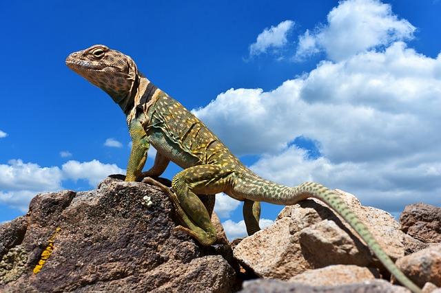 女にはよくわからない男の趣味7.爬虫類マニア