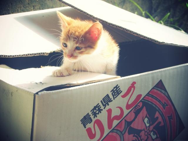 捨て猫の気持ち-3