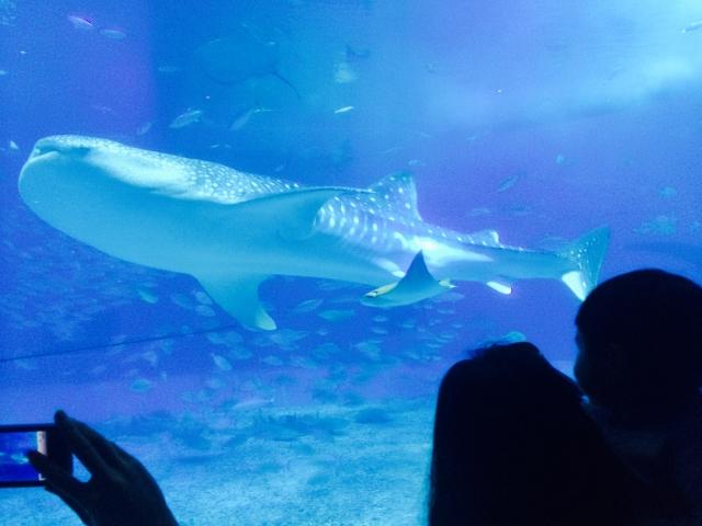 次のデートは水族館デート!水族館デートでの持ち物と注意点まとめ