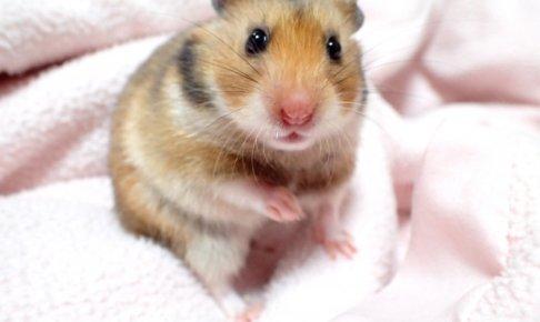 母性本能くすぐられる!癒される可愛い小動物系男子の特徴10個と落とし方!