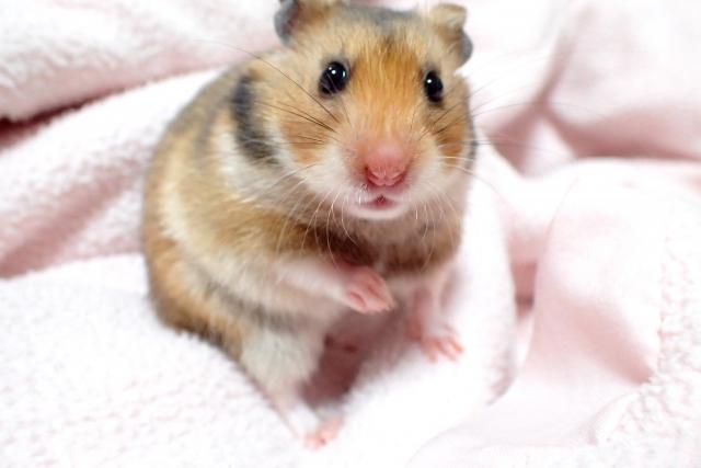 小動物みたいな人!小動物系男子の特徴とは?