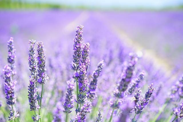 自然治癒力とは?自然治癒力を高める方法や植物が持つ力について