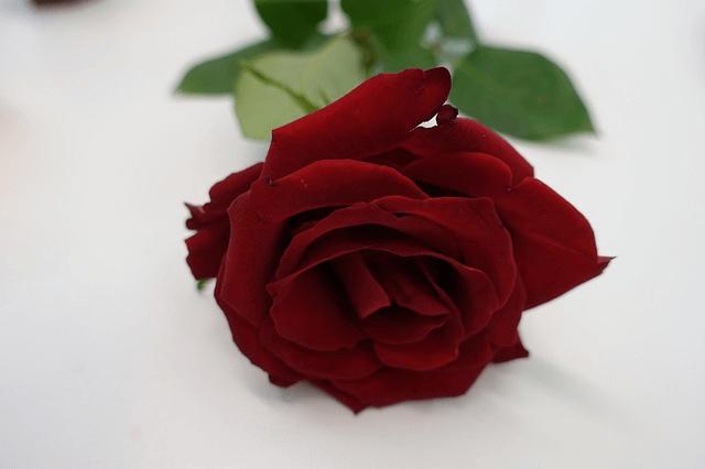 第1チャクラの色は「赤色」!赤の象徴的意味とそのパワーについて