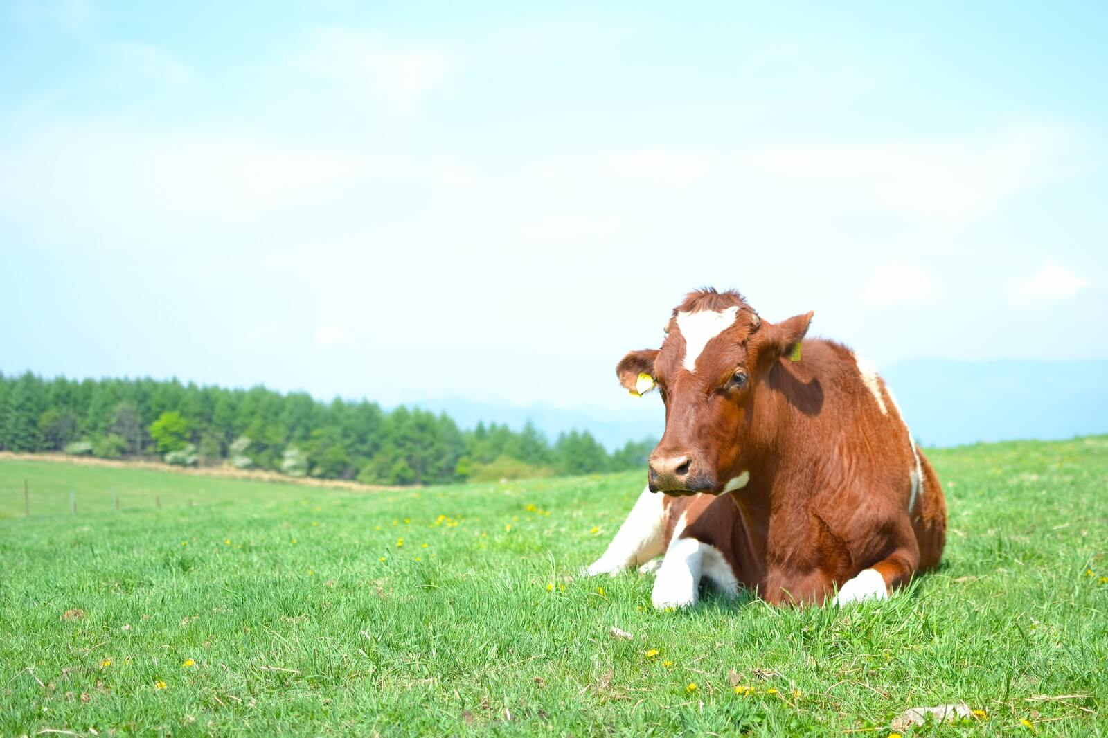 【星座×アロマテラピー】牡牛座の心と体におすすめのアロマテラピー
