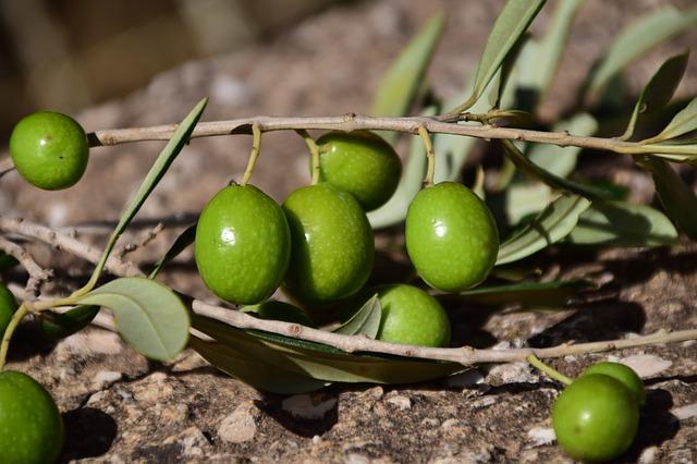 オリーブオイルはオリーブの実からできている!