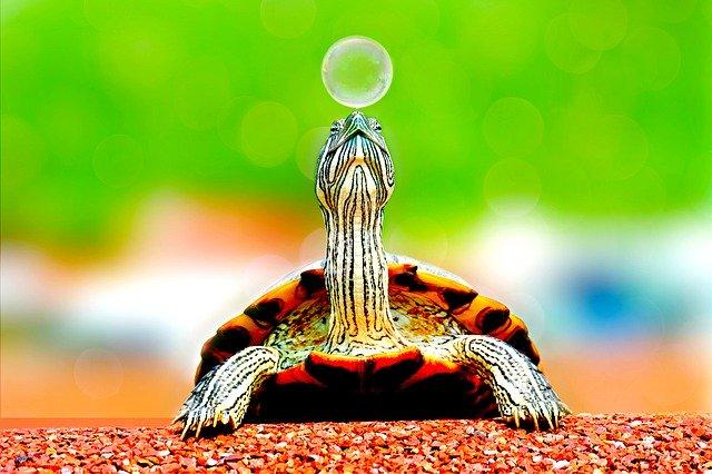 【夢占い】亀が卵を産む夢の意味