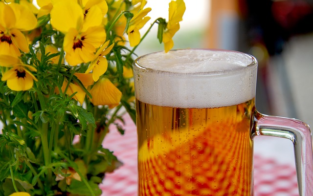 ビールは糖質制限中に飲んでもいいの?糖質オフのものは?