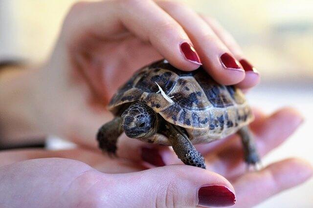 【夢占い】亀を助ける夢の意味