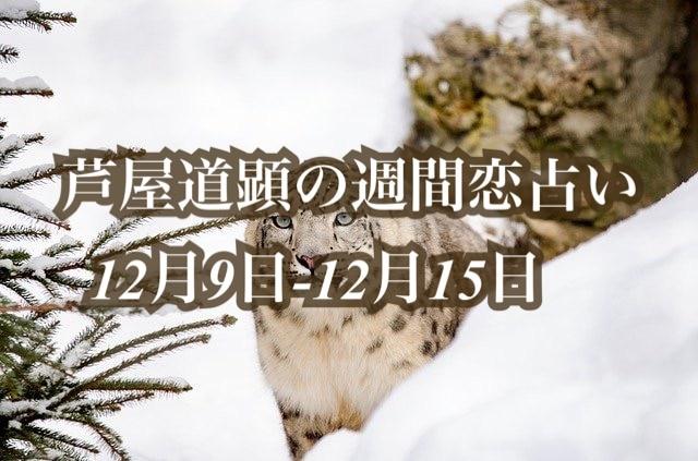 12月9日-12月15日の恋愛運【芦屋道顕の音魂占い★2019年】
