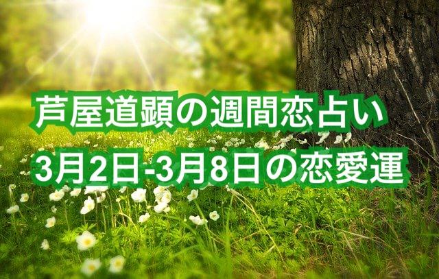 3月2日-3月8日の恋愛運【芦屋道顕の音魂占い★2020年】