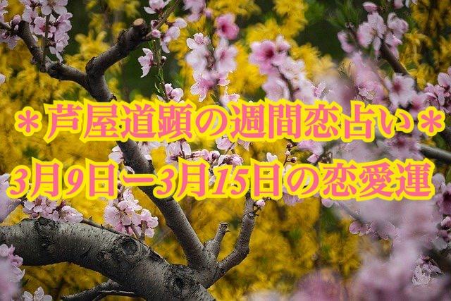 3月9日-3月15日の恋愛運【芦屋道顕の音魂占い★2020年】