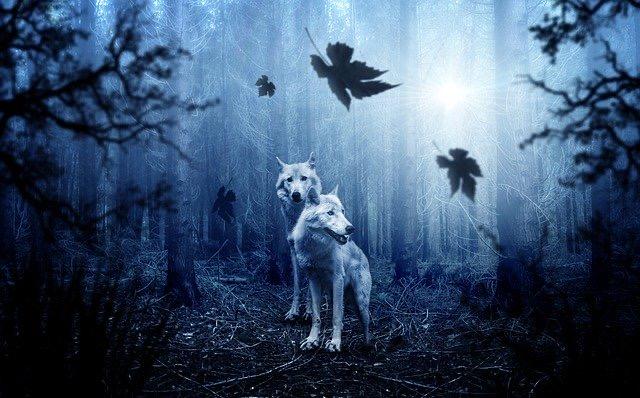 【辛口オネエ】国内で狂犬病発症者が。犬や動物に噛まれる運命的リスクを示す星の話【恒星】