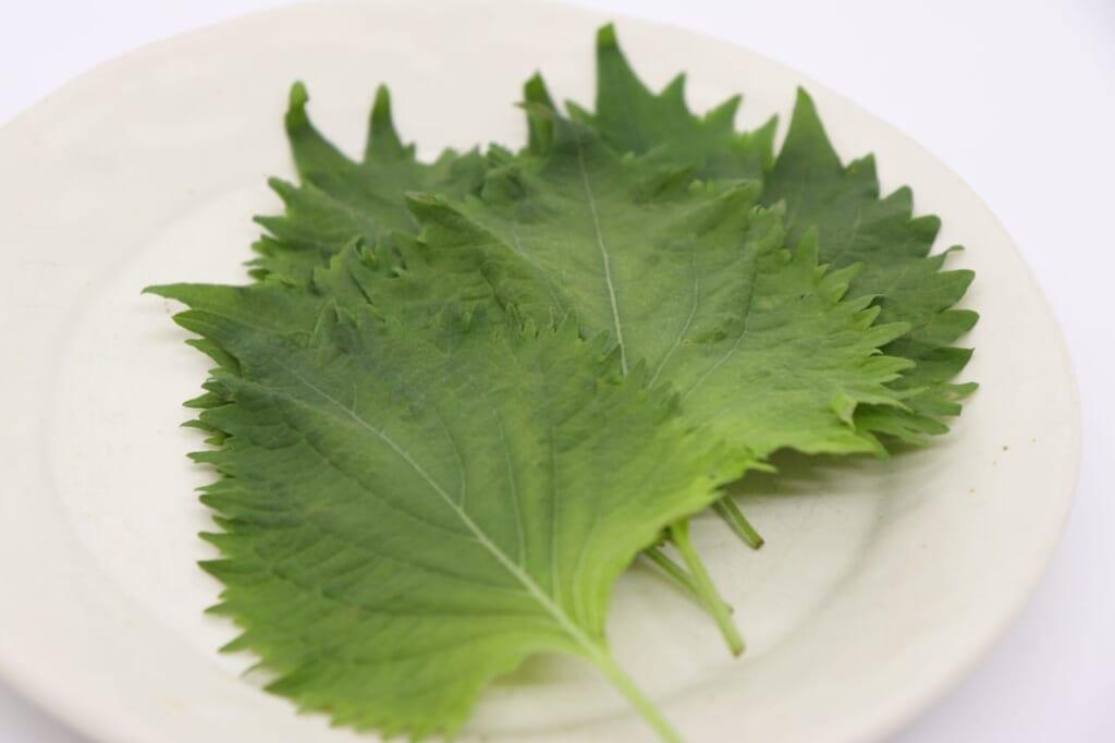 大葉は効果的な栄養が満載!?大葉のイメージが一気に変わる!