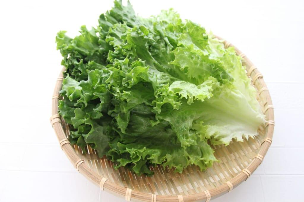 レタスの栄養が実はスゴイ!レタスの種類別栄養と効果まとめ