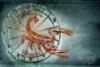 【星座×アロマテラピー】蠍座の心と体におすすめのアロマテラピー